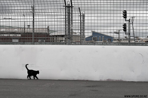 black cat graffiti photgraph