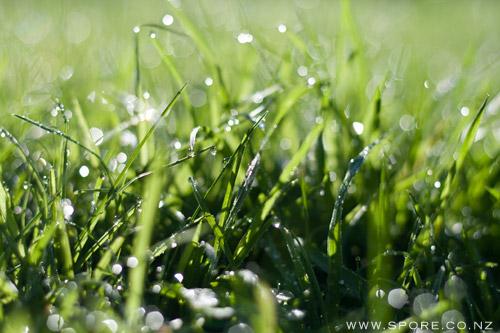 autumn morning grass