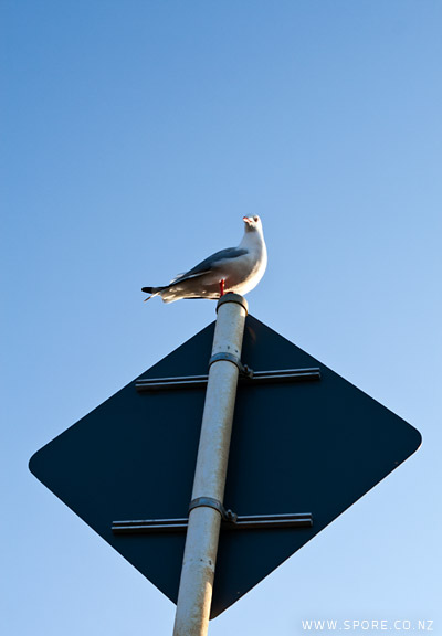 seagull on a sign photo